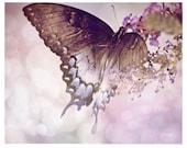Butterfly Photography, lavender, gray, spicebush butterfly, flower, Garden Delight, fine art photograpy print