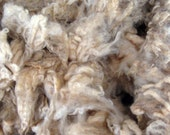 Raw New England Fleece (BFL/romney mix), lustrous wool with crimp - Fresh from the flock