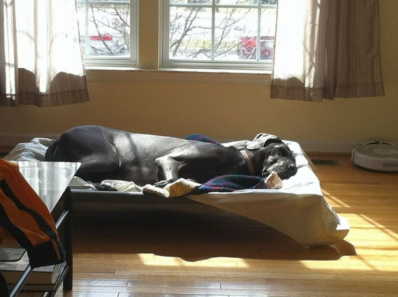 extra large dog bed for great dane 2