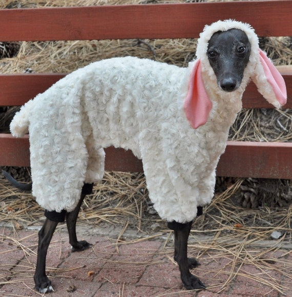 Image Result For Sheep Costumes For Dogs