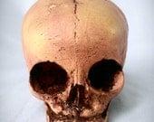 Reproduction Human Fetal skull by The Sanatorium