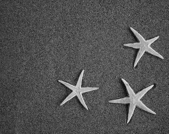 Three Starfish Photo
