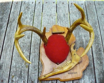 Michigan Deer Antlers Mount with Jaw Bone