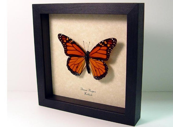 Dad's & Grad's Gift Best Seller 18 Years The Monarch Butterfly Conservation 111
