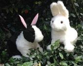 Rabbit : Lepus Curpaeums