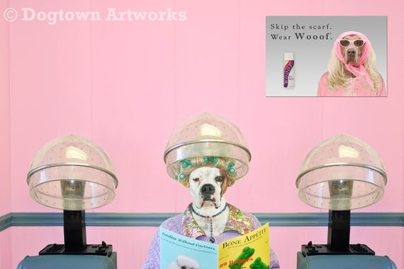 Beauty Shop, large original photograph of boxer dog in clothes getting her hair done in vintage beauty parlor shop