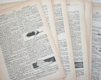 20 Vintage 1965 Illustrated Dictionary Pages