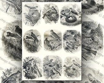 Birds, Nests and Eggs Vintage Black and White Clip Art Digital Collage Sheet Large Images Printable Download