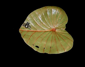 Bug on a Lily Pad