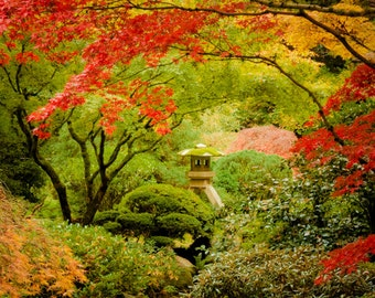 Autumn Photography Fall Colors Photo Red Maple Japanese Shrine Garden Photograph Autumn Colors Red Leaves nat92
