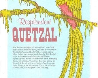Resplendent Quetzal Woodblock + Letterpress Print