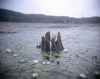 dreamy spring photo, fine art, retro nature, decor, holga, nature, lake, lily pad, spring photo, flowers, landscape photo, blue, pastel, zen