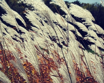 GLOW GRASS Original Color Nature Close Up Art Photograph