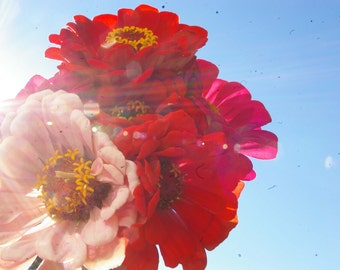 Zinnia Mixture // organic heirloom seeds // flower seeds from our farm // organic garden // flowers for the cottage garden