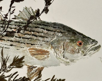 "Striped Bass - ""Rock Fish"" - Gyotaku Fish Rubbing - Limited Edition Print (31 x 16)"