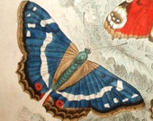 1860's ANTIQUE BUTTERFLY PRINT hand colored engraving vg condition-Emperor, Peacock, red,blue,beige,amber