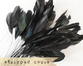 24pcs - BLACK - Stripped Coque Hackle - dye on natural patterns