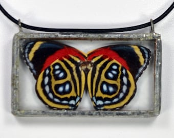 Real Butterfly Necklace - Callicore Cyllene - Glass And Lead Free Solder
