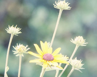 Summer Flower Photograph yellow teal blue green garden morning light sunny black eyed susan daisy bokeh dreamy cottage chic