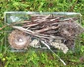 Bird Nests - Tree Bark - Natural Findings - Woodland