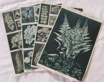 "vintage FLOWER EPHEMERA -- salvaged from a 1913 ""Book of Knowledge"" (8 pages/4 sheets)"