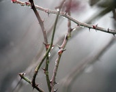 Frozen Thorns, Fine Art Photography, grey, green, brown, black, ice storm, winter decoration, country living, interior design, twigs, hurt