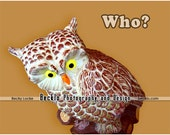 Who Owl statue cute question photograph