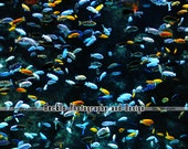Fish at the Toronto Zoo aquarium photograph