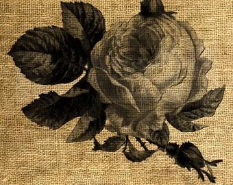 INSTANT DOWNLOAD - Rose Vintage Illustration - Download and Print Image Transfer - Digital Sheet by Room29 - Sheet no. 1010