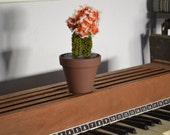 Hand-knit Cactus - Orange - Hibotan - Moon Cactus - Knitting - Plants - Yarn