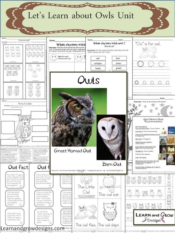 Let's Learn about Owls Unit