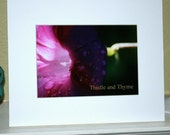 Any three matted photos - 5x7 photographic art prints