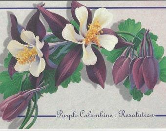 Purple Columbine: Resolution Vintage Postcard, 1993