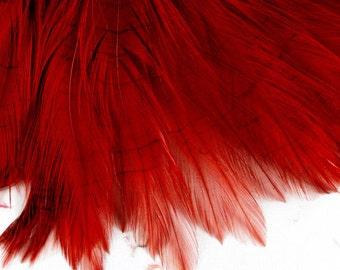burnt orange Feathers 5 inches plus     PND-05