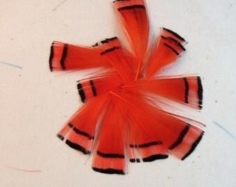 feathers orange Golden Pheasant Tippet  Dyed 10pk