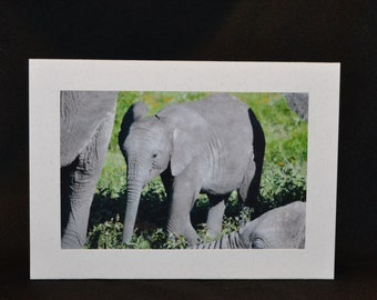 Original Photography Note Card - Elephant 1