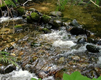 NEW...PHOTO Card, Creek, Blank Card, Digital, Summer, Water, Cabin Decor, Lodge Decor, Ellen Strope, River, Forest