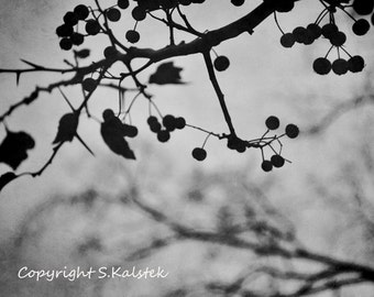 Nature Photography Berry Branches Tree Wall Art Black and White Winter Tree 12x8