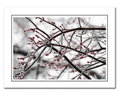 Nature Note Card Includes Envelope, Winter Landscape photo card, Greeting Card, Red, White, Thank You Card, blank notecards