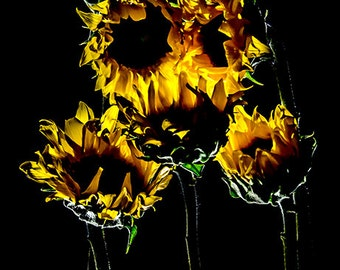 Sunflower Print, Still life flower wall art, Cubicle decor, Yellow, Available in many Sizes