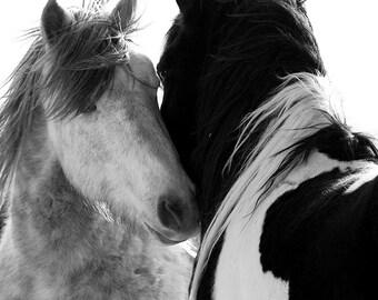 Two Stallions - Fine Art Wild Horse Photograph - Wild Horse - Black and White - Washakie
