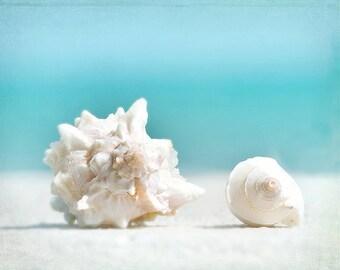 sea shell print, sea shells photography, beach decor, beach photography, turquoise, seashells, beach cottage, shore house, coastal living