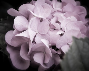 wall art, home decor, Floral Photography- soft pastel pink petals hydrangea flower - Pretty in PInk