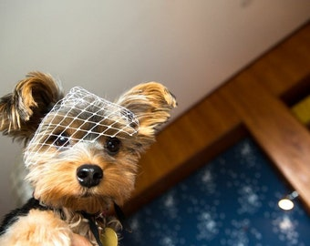 Dog Veil