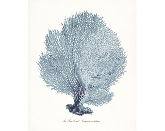 Coastal Decor Sea Fan Sea Coral Giclee Art Print 8x10 French Blue