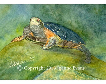 Spotted Turtle Watercolor Card