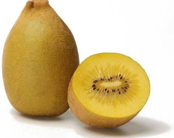 5 Golden Kiwi Seeds-1044