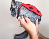 Ladybug / ladybird costume. Chinchilla pet Halloween costumes by la Marmota Café.