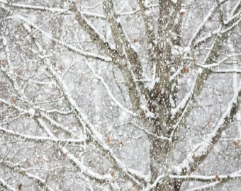 Winter Snow Winter Woodlands Magical Falling Snow Snowstorm Snowscape Abstract Nature Photography, Fine Art Print