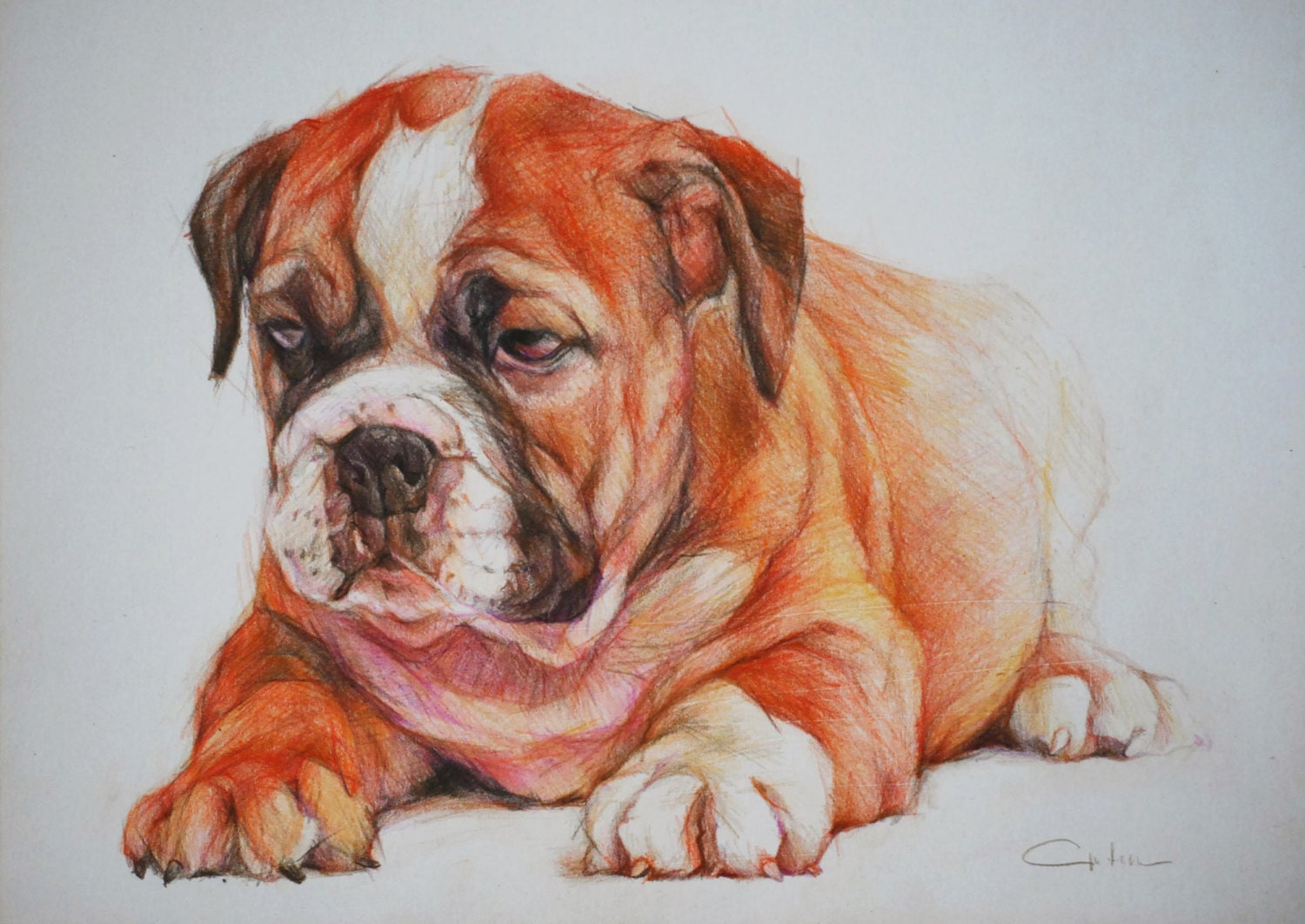 Items similar to English Bulldog Puppy ART Pet Portrait ...